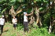 équipe terrain ferme agricole 2017 semer CMD el chico -Cuba -havane