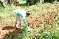 travail agricole ferme CMD