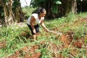 directrice yaneysi équipe terrain ferme agricole 2017 semer CMD el chico -Cuba -havane