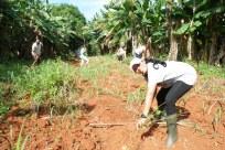quenia équipe terrain ferme agricole 2017 semer CMD el chico -Cuba -havane