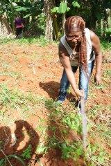 melba équipe terrain ferme agricole 2017 semer CMD el chico -Cuba -havane