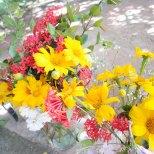 fleurs-récolte CMD 2019 ferme finca cuba havane El chico