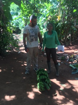 nico -muti -récolte CMD 2019 ferme finca cuba havane El chico