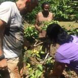 nic-récolte CMD 2019 ferme finca cuba havane El chico o-quenia