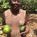 melba -récolte CMD 2019 ferme finca cuba havane El chico