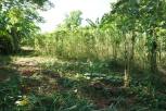 récolte CMD 2019 ferme agricole cuba