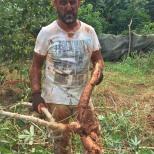 nico vice-président -récolte CMD 2019 ferme finca cuba havane El chico