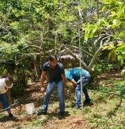 récolte fruits petits coeurs de Cuba Centre Miséricorde divine El Chico2