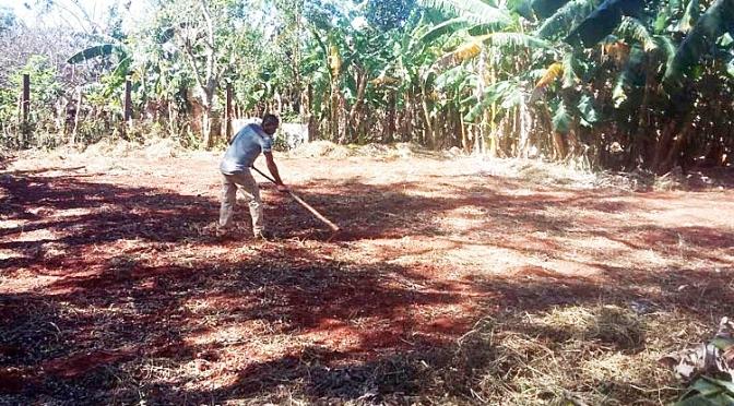 DEFRICHAGE, NETTOYAGE ET PREPARATION DE NOTRE EXPLOITATION AGRICOLE DE CUBA